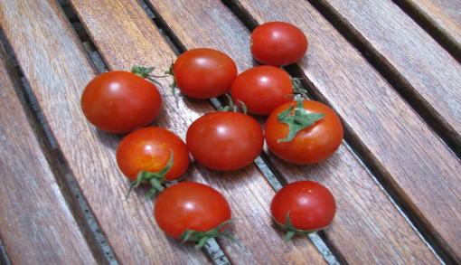 Το άνυδρο έδαφος, κάνει την γεύση από τα ντοματάκια Σαντορίνης μοναδική